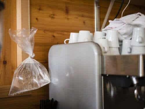 7 soluții naturale pentru alungarea muștelor