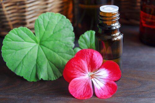Uleiuri pentru combaterea celulitei precum uleiul de geranium