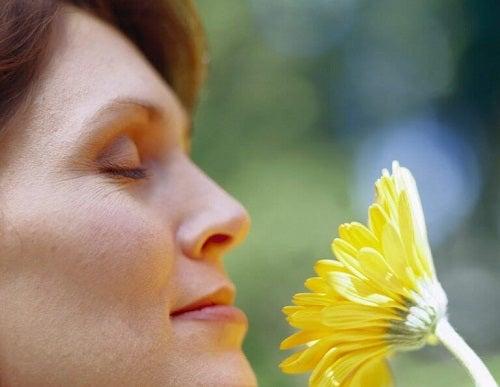 Beneficii ale plantelor de interior pentru bunăstarea oamenilor
