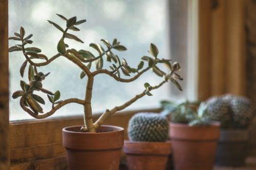 7 beneficii ale plantelor de interior