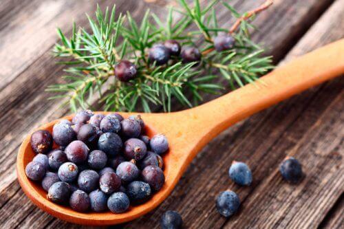 Ienupărul pe lista de plante sănătoase care ajută la slăbit