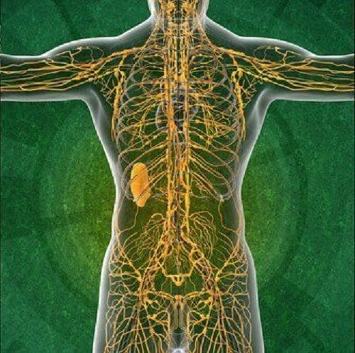 4 informații interesante despre sistemul limfatic