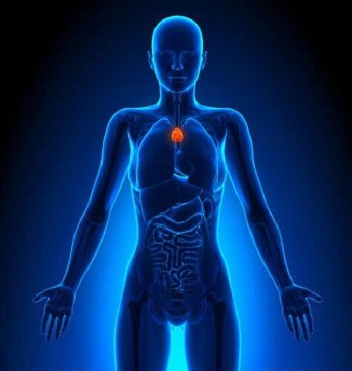 Informații interesante despre sistemul limfatic și timus