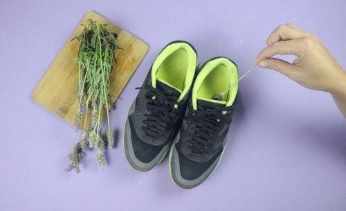 Lavanda pe lista de remedii pentru mirosul neplăcut din pantofi