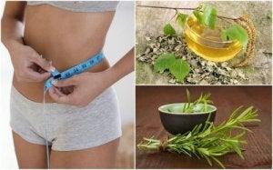 Ce alimente contribuie la pierderea în greutate: lista - Diagnostice
