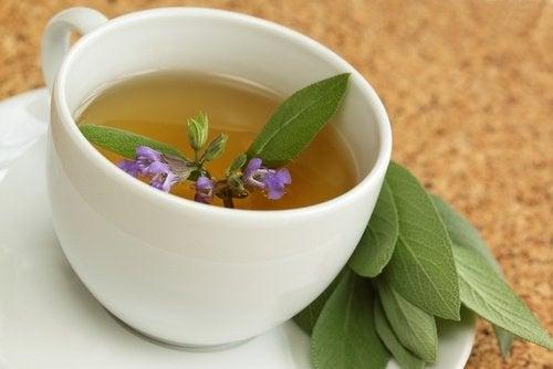 Salvia pe lista de ingrediente naturale pentru a trata durerile în gât