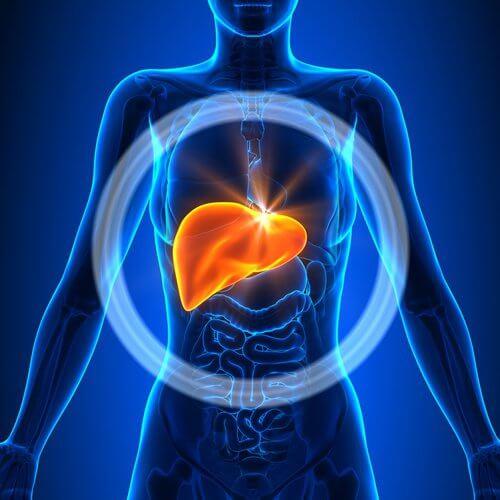 Simptome ale ficatului mărit în organism