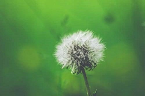 Tratamentul rinitei alergice în funcție de factori alergeni precum puful plantelor