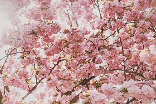 Polenul ce declanșează nevoia de tratamentul rinitei alergice sezoniere