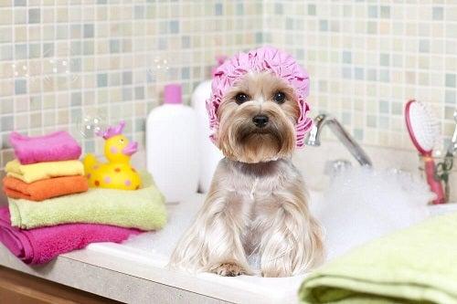 Trucuri pentru a-ți menține casa curată precum spălarea animalului de companie