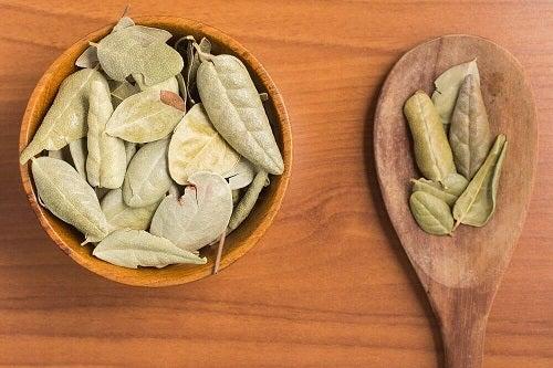 Boldo pe lista de plante carminative pentru a combate gazele intestinale