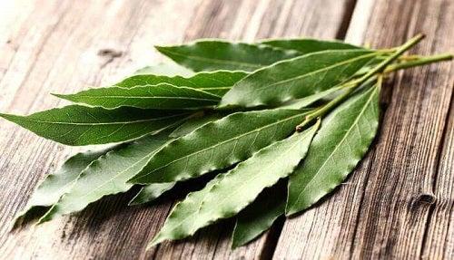 Cum să scapi de insectele din casă cu eucalipt