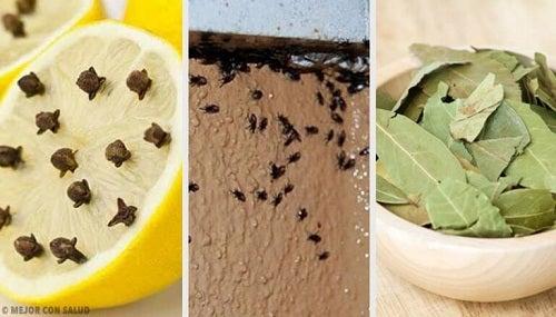 Cum să scapi de insectele din casă în mod natural