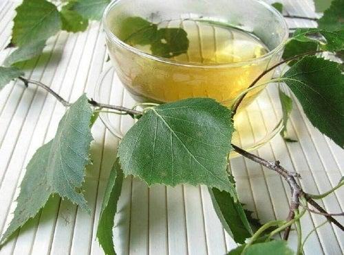 Mesteacăn inclus în remedii naturiste pentru infecțiile tractului urinar
