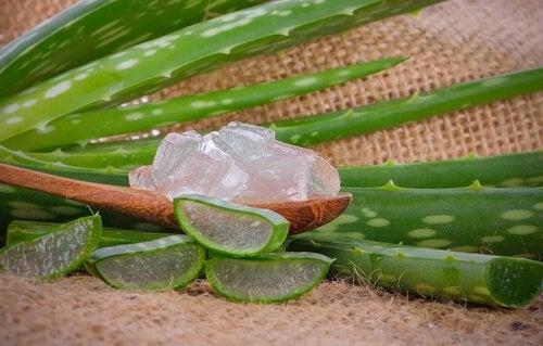 Remedii naturiste pentru gingiile inflamate cu gel de aloe vera