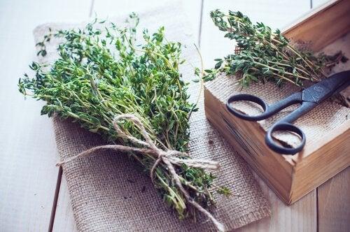Rozmarin pentru prepararea unui remediu natural cu virnanț și lămâie