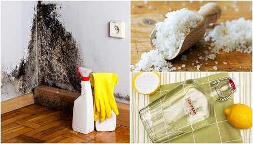 5 trucuri pentru a elimina umezeala din casă