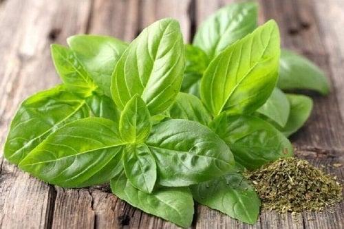 Busuiocul pe lista de remedii naturale pentru tinitus