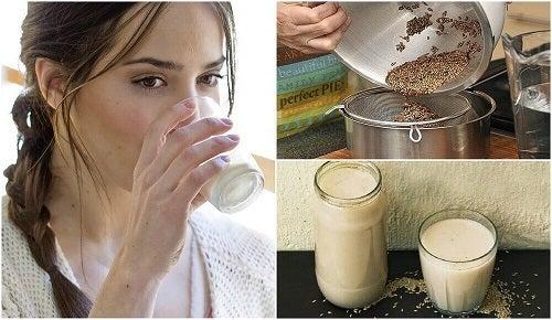 Ce este laptele de meiul canarilor și cum se prepară?