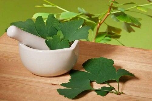 Remedii naturale pentru tinitus precum ginkgo biloba
