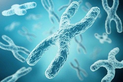 Prin cromozomul X se explică de ce inteligența se moștenește de la mamă