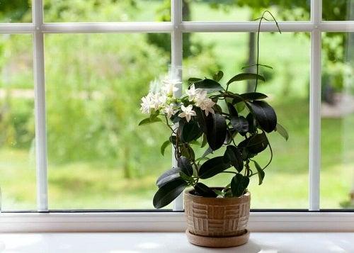 Cum să cureți frunzele plantelor pentru a le menține sănătoase