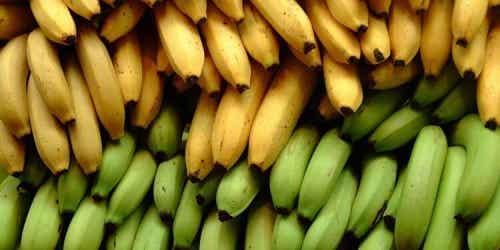 3 diferențe între bananele plantain și cele obișnuite