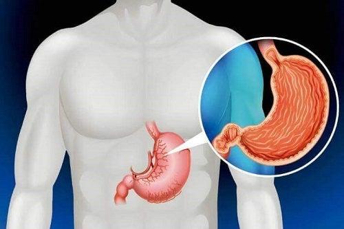 Organe de care nu ai nevoie să trăiești precum stomacul