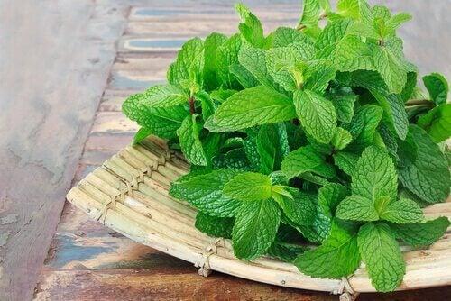 Remedii cu frunze de mentă pentru diverse afecțiuni