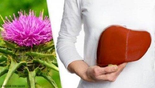 Remedii naturiste pentru ficatul gras cum ar fi armurariul