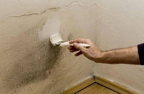 5 soluții pentru eliminarea umezelii din casă