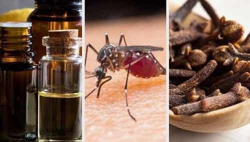 10 arome naturale care alungă țânțarii