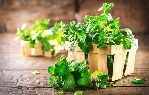 Ceaiuri pentru combaterea gazelor intestinale precum cel de mentă
