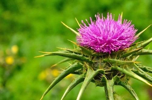 Plante și alimente bogate în potasiu