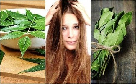 Cele mai bune remedii cu rozmarin pentru îngrijirea părului gras