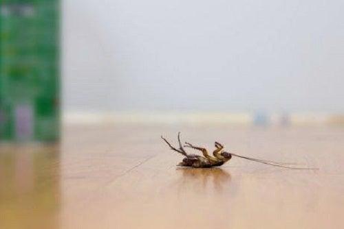 5 trucuri pentru a alunga gândacii de bucătărie