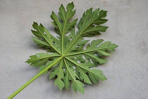 Beneficii oferite de papaya și de frunzele sale