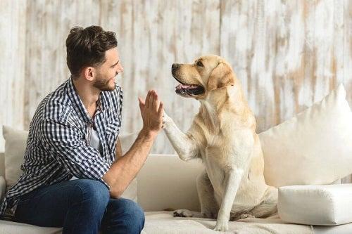 Câinele poate fi cel mai bun animal de companie