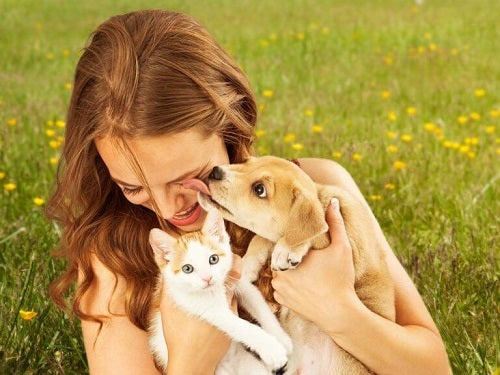 Titlul de cel mai bun animal de companie disputat de câini și pisici