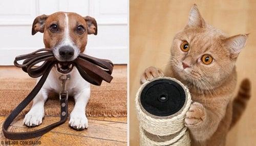 Care este cel mai bun animal de companie?