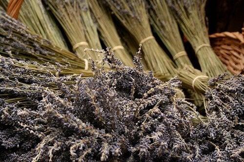 Întrebuințările uleiului de lavandă preparat acasă