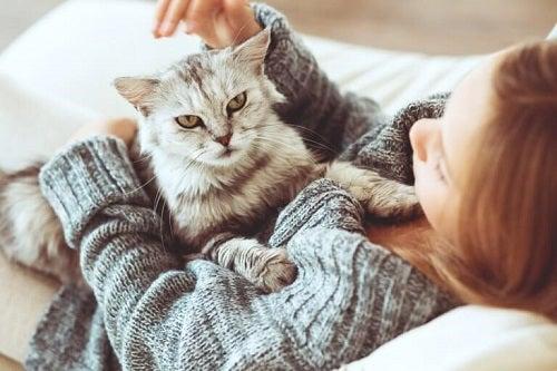 Pisica poate fi cel mai bun animal de companie