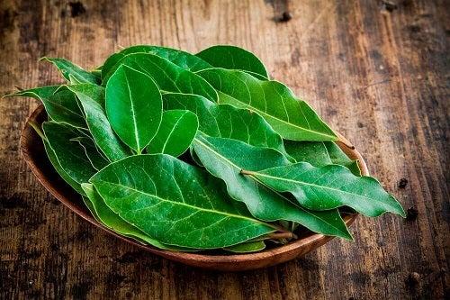 Plante care ajută la eliminarea flegmei precum frunzele de dafin