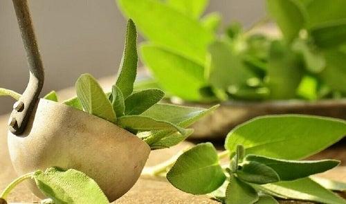 Remedii pentru dureri de călcâi cu frunze de salvie