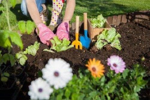 Descoperă 7 utilizări ale oțetului în grădină