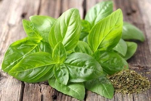 Ceaiuri naturale pentru hipertensiunea arterială preparate cu busuioc