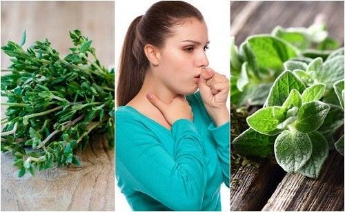 5 plante medicinale împotriva tusei productive