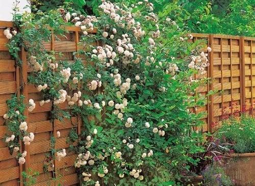 Ghidul grădinii urbane presupune flori agățătoare