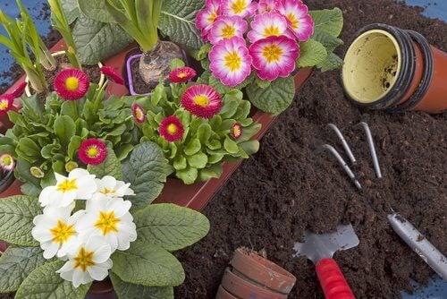 Ghidul grădinii urbane presupune flori și unelte de grădină