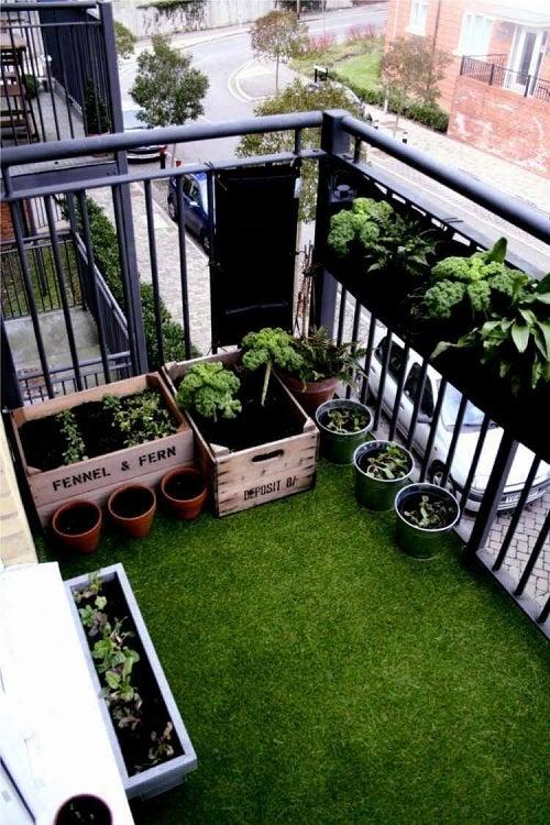 Ghidul grădinii urbane în oraș